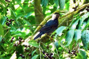 The Wonderful Wildlife of Halong Bay