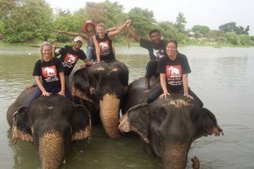 Elephantstay (Ayutthaya)