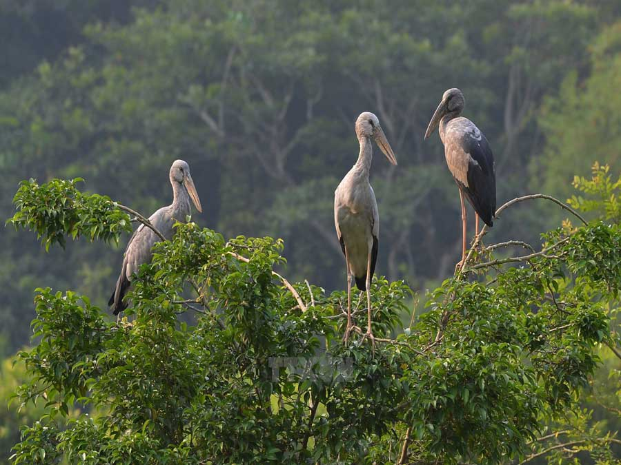 Thung Nham ecotourism zone