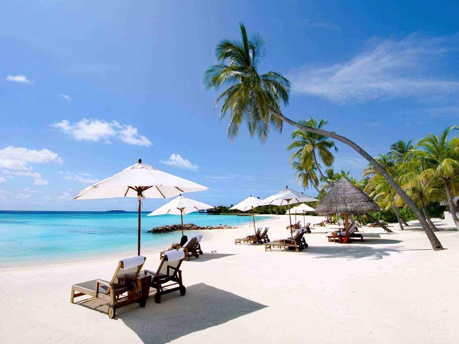 monkey island monkey island travel monkey island tours. Black Bedroom Furniture Sets. Home Design Ideas