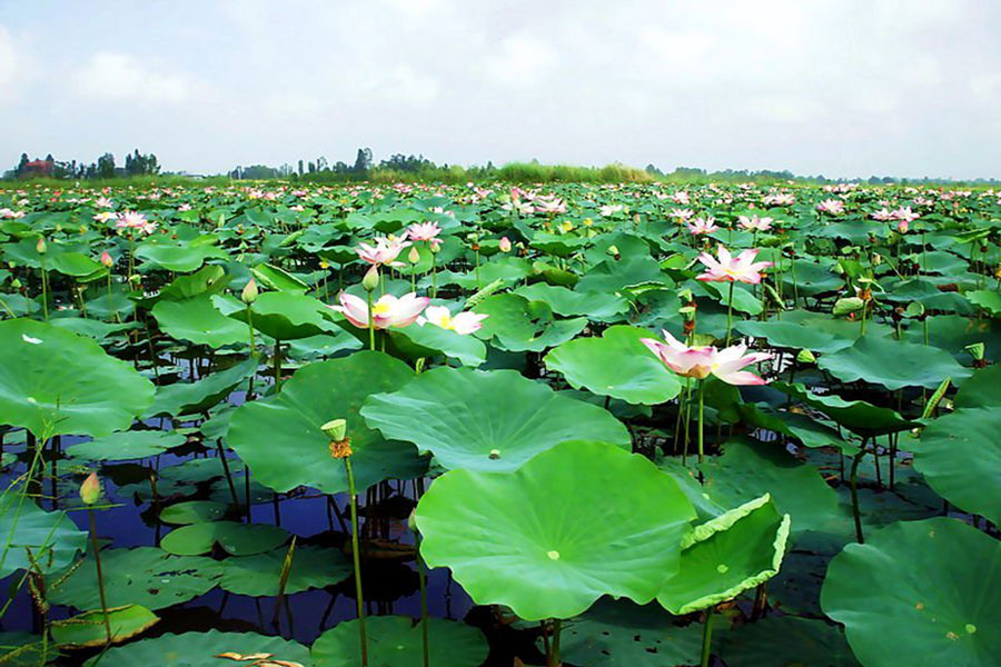 Things to do in Ben Tre, Places to Visit and Best Time to Visit in Ben Tre