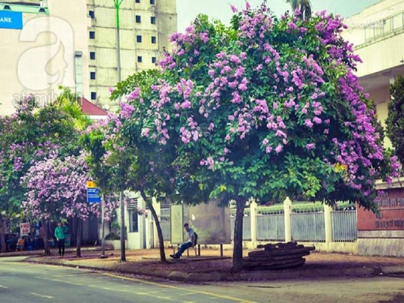 Hanoi-flower-1