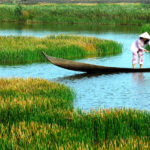 Why-should-Australian-tourists-make-Mekong-Delta-tours-once-1