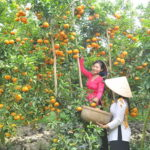 Cai be Fruit Orchard