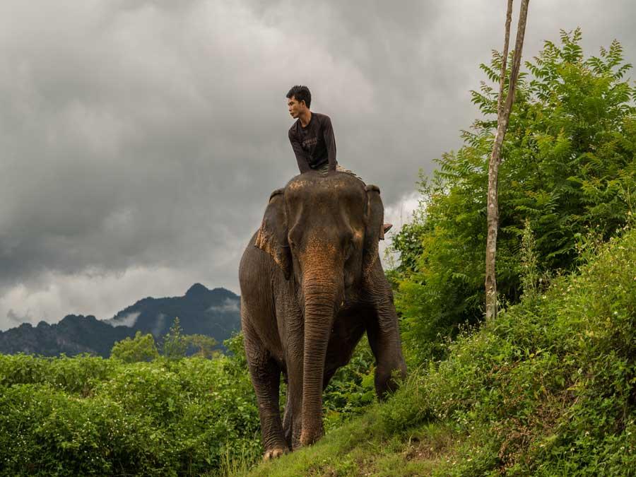 Elephant Village Sanctuary