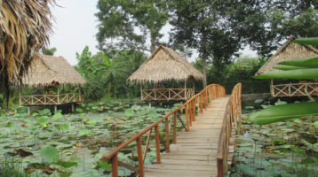 Mekong Delta tours to explore beautiful eco-tourism sites in Can Tho