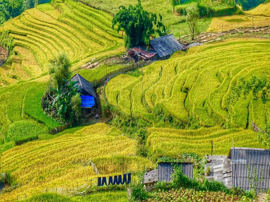 Lim Thai Village