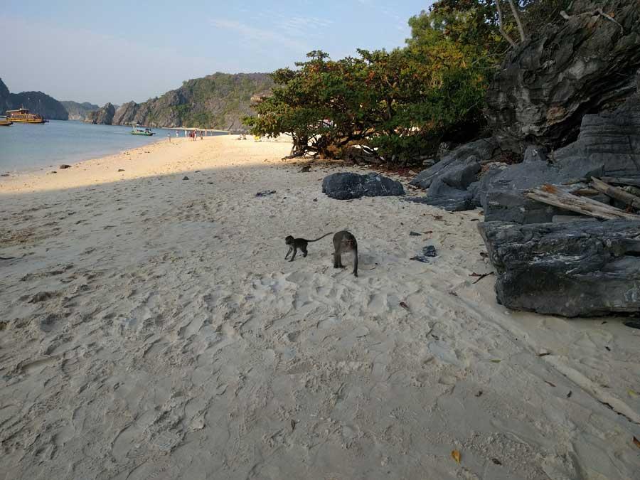 Monkey Island Cat Ba