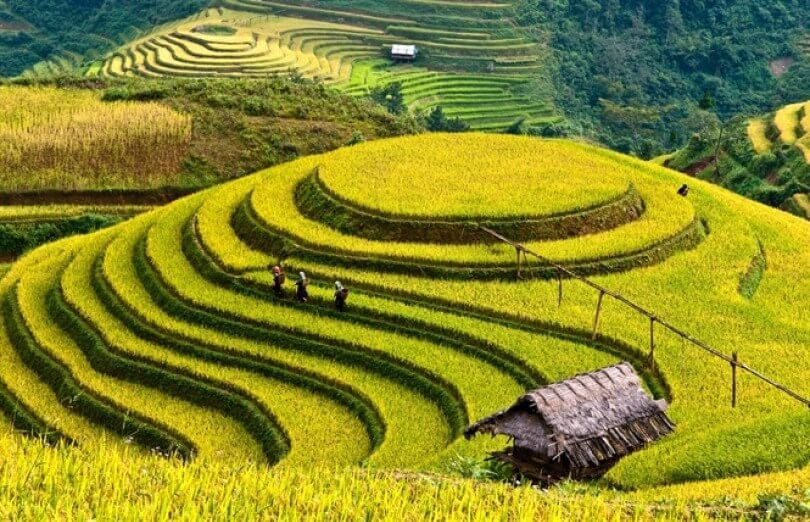 Sapa terraces are as beautiful as a picture
