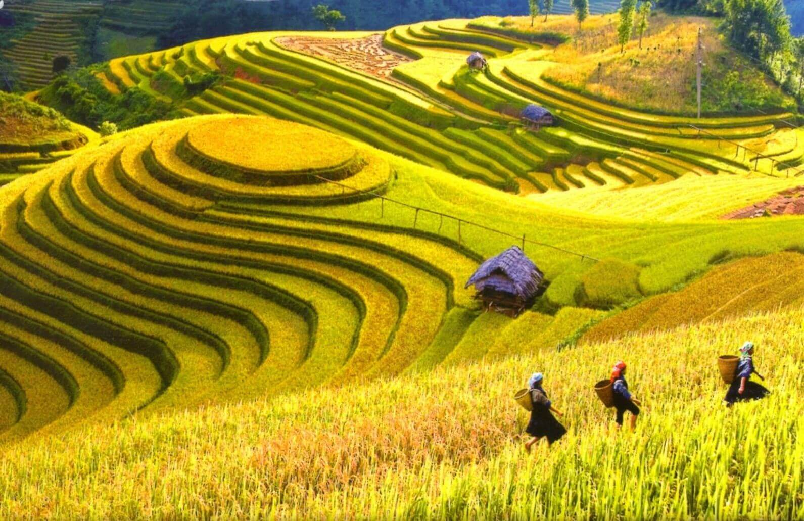 Terraced fields Sapa in the top 11 most beautiful in the world