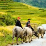 Discover beautiful scenes of Sapa in Vietnam tours
