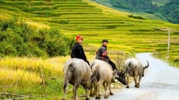 Attractive Vietnam attractions that travelers should not miss