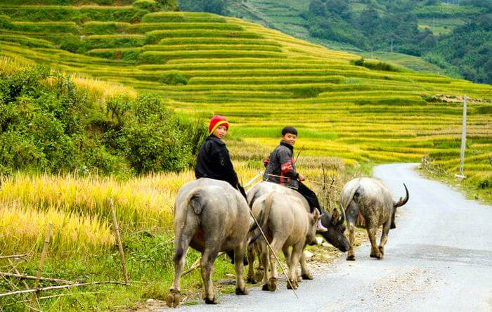 Discover beautiful scenes of Sapa in Vietnam tours